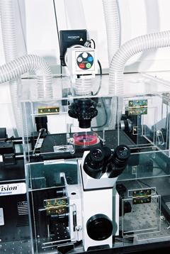 חיבור של מצלמה למיקרוסקופ