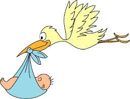 חסידה עם תינוק