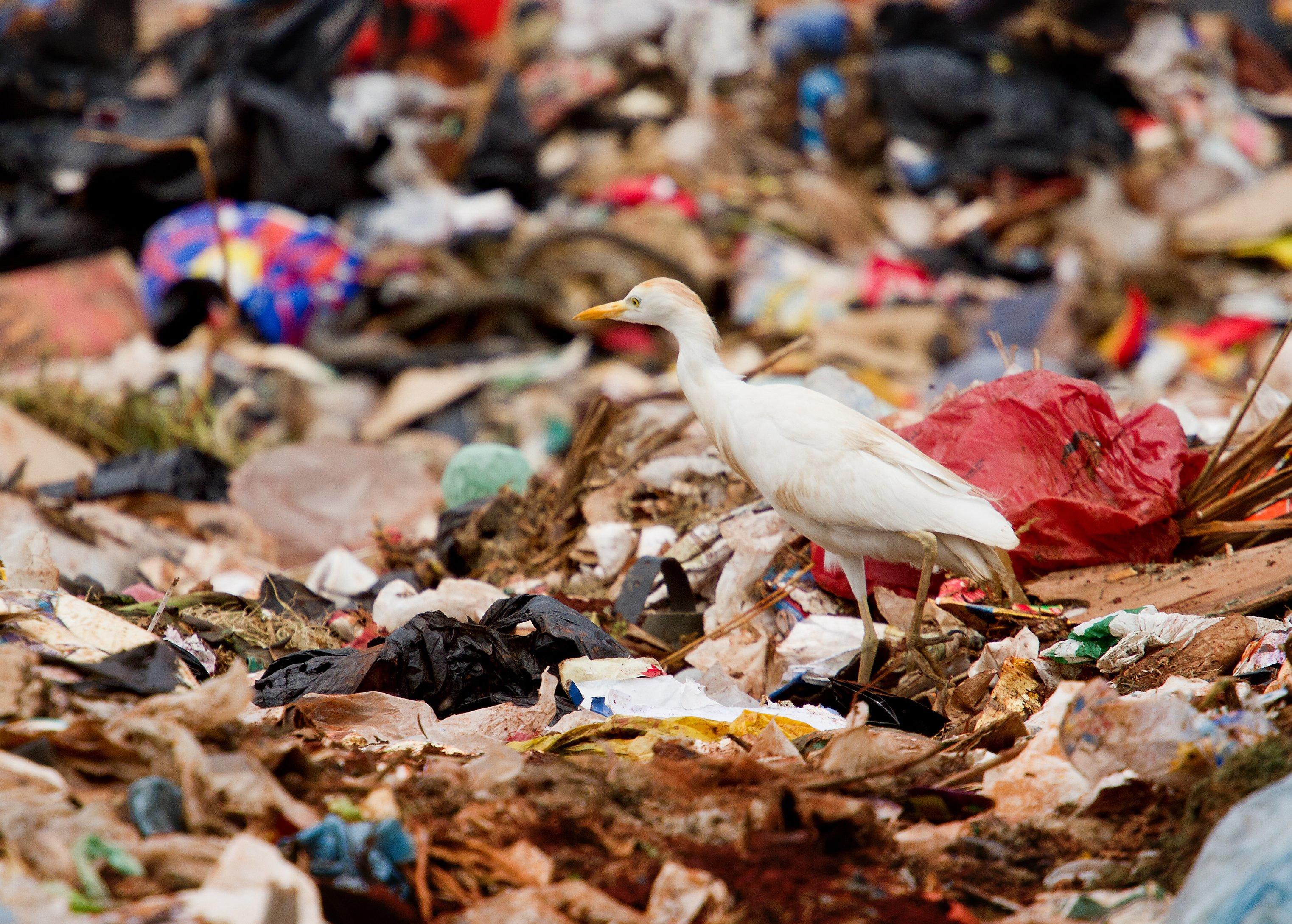 ערימת פסולת פלסטיק
