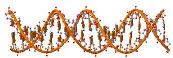 דגם מולקולרי של DNA