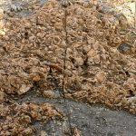 כרם מהרל - מאובנים מצוררים של צדפות וקונכיות בסלע גיר