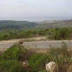 כרמל - תצפית מחניון הצוק מערבה