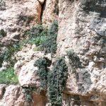 סדקים בסלע גיר