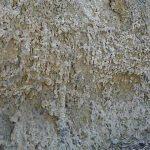 חירבת קרתה - מאובני שורשים בכורכר