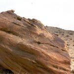 עץ מאובן במכתש חתירה
