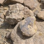 מאובנים מהטריאס בסלעי תצורת סהרונים