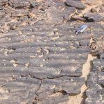 גלונים באבן חול ליד נחל רמון