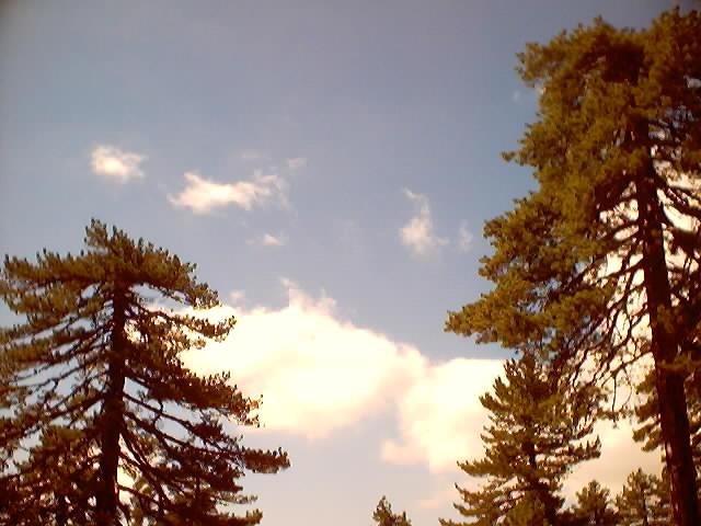 נוף עננים עצים