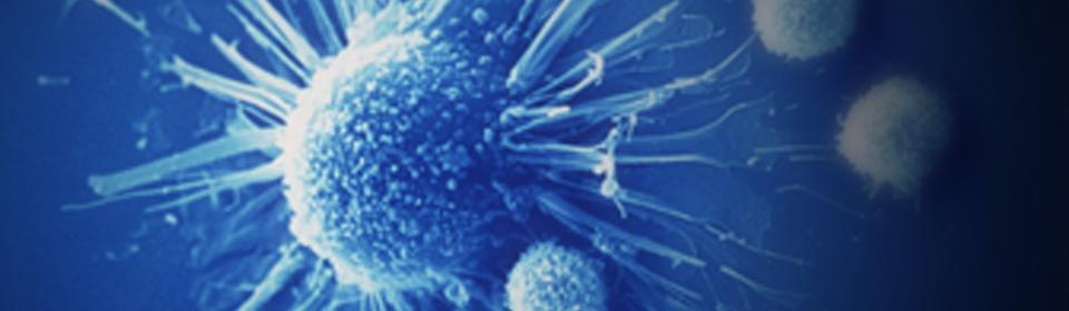 מערכת החיסון