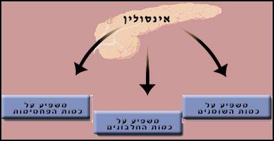 גרף המציג את השפעות האינסולין: משפיע על כמות השומנים, משפיע על כמות החלבונים, משפיע על כמות הפחמימות